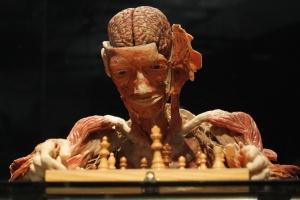 Un cadavere plastinato alle prese con gli scacchi.